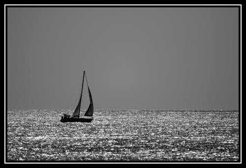 Sète est avant tout le premier port de pêche de France